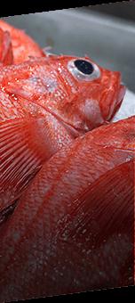 北浦の鮮魚 活イカ