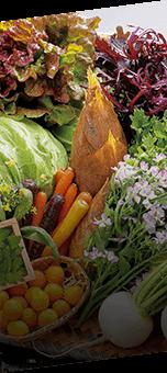 地元下関・山口の旬の野菜
